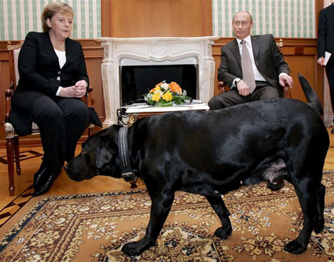 German Chancellor Angela Merkel looks nervous as then Russian President Vladimir Putin brings in his dog Koni during their meeting in 2006. /EPA
