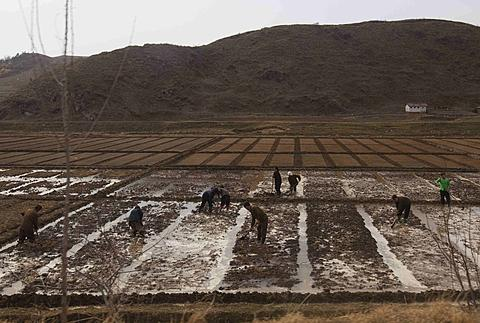 People work in a field outside of Kaesong, North Korea, on April 17, 2011. North Koreas perennial food shortage has reached a crisis point in 2011, aid workers say, because of torrential rains, the coldest winter in 60 years and rising food prices. /AP