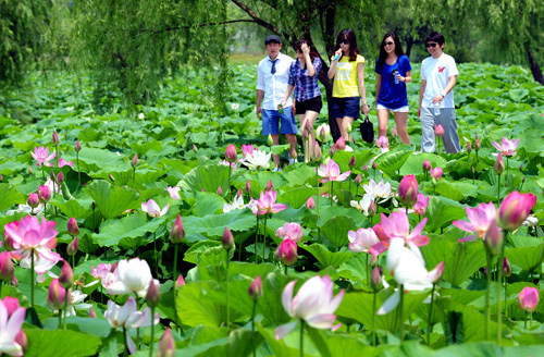 List Of Synonyms And Antonyms Of The Word Korean Lotus Flower