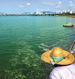 A stretch of the Han River in Seoul is green with algae on Tuesday.