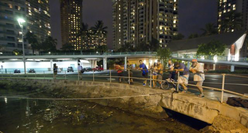 Visitors and Oahu residents watch the water level in the Ala Wai Harbor waiting for the arrival of a tsunami on Oct. 27, 2012 in Honolulu. /AP