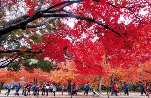 Autumn foliage is at its peak at Mt. Naejang in Jeongeup, North Jeolla Province on November 3, 2013.