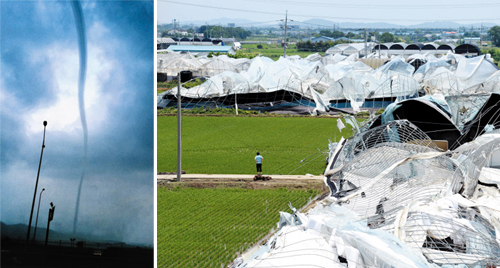 Left: A strong whirlwind is spotted in Ilsan, Gyeonggi Province on Wednesday in this screen grab from broadcaster SBS.; Right: A man looks at greenhouses destroyed by a strong whirlwind in Ilsan, Gyeonggi Province on Wednesday. /News 1