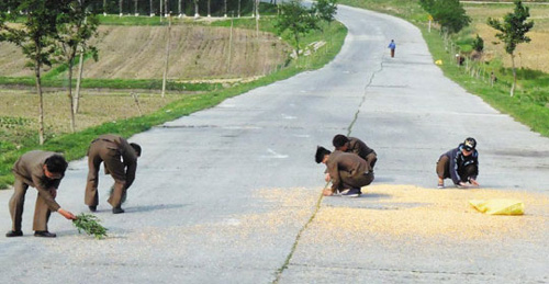 In this file photo, North Koreans pick up grains scattered on the road near Wonsan, Kangwon Province.