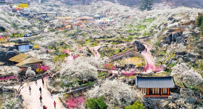 2019030801321 0 - Ранняя весна - в Корее цветут деревья