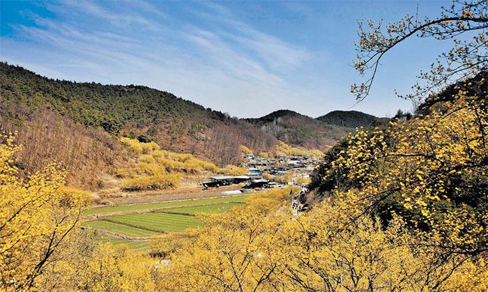 2019030801321 2 - Ранняя весна - в Корее цветут деревья
