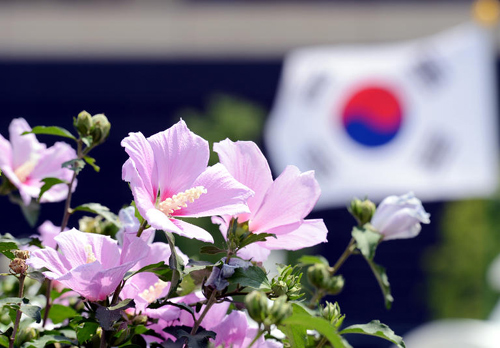 A fusion of diverse culture and diverse colour here in Korea:: National  Flower Becomes Hard to Find in within Korea
